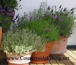 Цветы и растения в горшках ящиках и