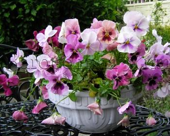 Цветы уличные в горшках