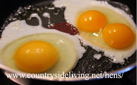 Яйцо с двумя желтками (двойной желток в курином яйце)