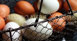 Как проверить яйца на свежесть?
