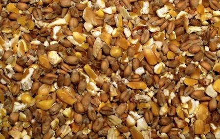 Зерновой корм для кур несушек. Подкормка для куриц зимой