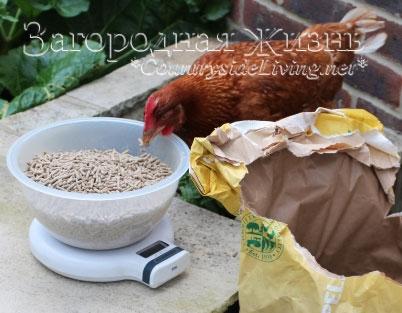 Корм для кур. Чем кормить куриц несушек