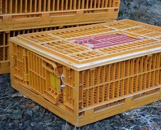 Клетка для перевозки домашней птицы