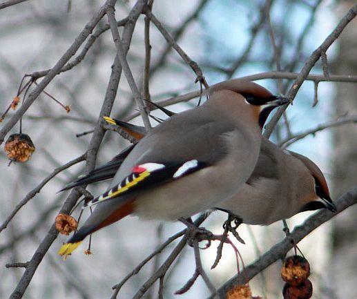 Птиц красивые птицы подмосковья птицы