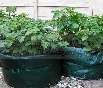 Картофель: выращивание в мешках. Мой огород