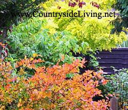 Осень на нашей улице. Осенние цвета