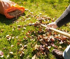 Опавшие листья. Что делать с опавшими листьями