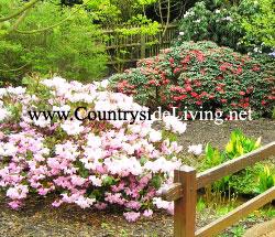 Лучшие декоративные кустарники для сада