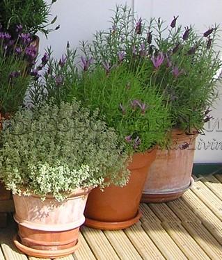 Цветы и растения в горшках, ящиках и корзинах. Сад в контейнерах