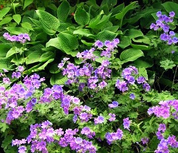 Садовые цветы и кустарники 93
