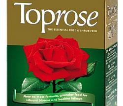 Уход за садовыми розами весной. После обильного полива, внесите удобрение. Toprose