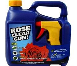 Садовые розы: весенняя обработка. Опрыскивание роз от вредителей и болезней