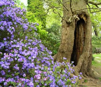 Естественный природный дикий сад
