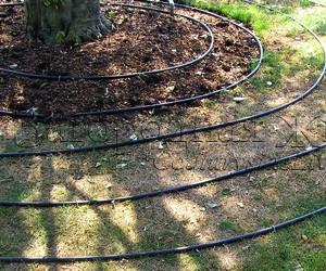 Полив огорода, сада, участка. Как поливать правильно деревья, капельный полив