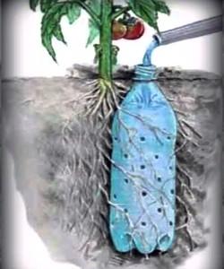 Как поливать через дырявую бутылку. Полив растений в жару