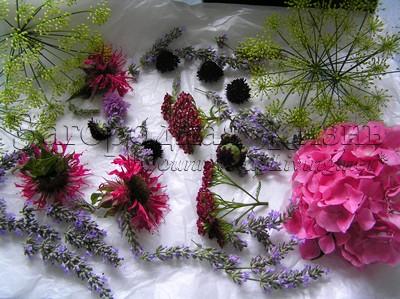 Сухоцветы, сухие цветы. Сушка растений и цветов на воздухе