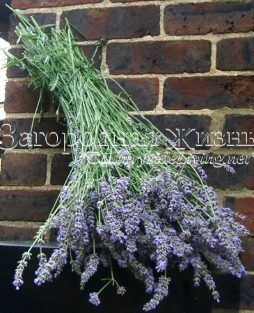 http://www.countrysideliving.net/img/at-home/dry-flowers_lavender.jpg