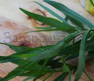 Эстрагон (тархун): выращивание, свойства. Листья эстрагона