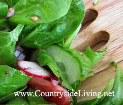 Свежий салат с французским соусом (заправкой)