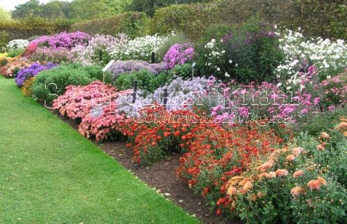 Осенние цветники в Ботаническом саду Уизли, Англия