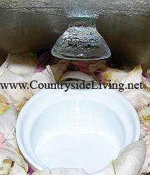 Розовая вода, рецепт. Приготовление розовой воды
