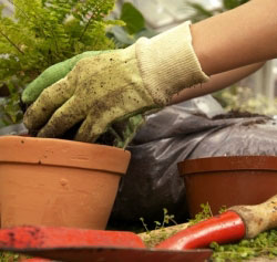 Работая в саду, всегда надевайте защитные перчатки