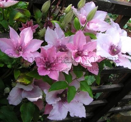 фото садовых участков с цветами и названиями
