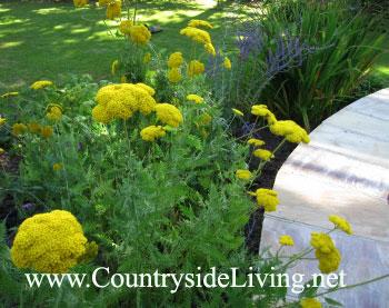 Цветник своими руками. Сиреневый миксбордер (смешанный цветочный бордюр, цветник), август 2011 г.