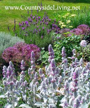Сиреневый миксбордер (смешанный цветочный бордюр, цветник), 2006 г.