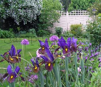 Цветник своими руками. Сиреневый миксбордер (смешанный цветочный бордюр, цветник), май 2007 г.