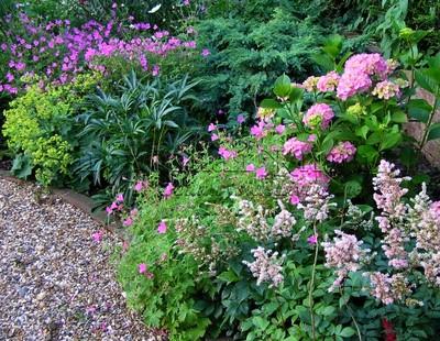 Цветы для сада и огорода многолетники фото купить тенелюбивые заказ цветов самара с доставкой