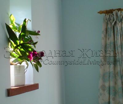 Дендробиум, орхидея (Dendrobium). Уход в домашних условиях