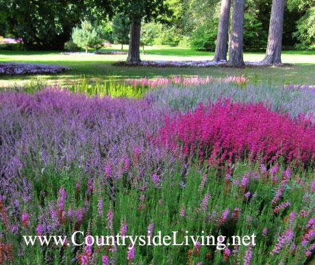 садовые луковичные цветы фото:
